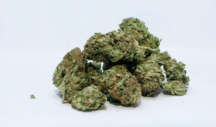 Marijuana legale in commercio anche in Italia, si fuma, rilassa ma non sballa