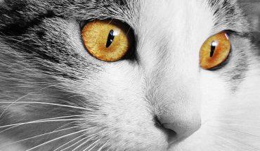 Vicine di casa in lite per un gatto, guerra del micio davanti al tribunale del Riesame